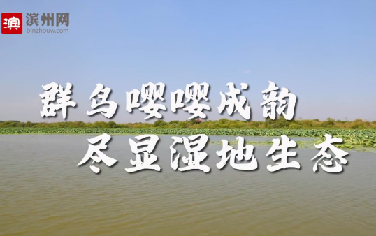 【视频】群鸟嘤嘤成韵  尽显湿地生态——小开河国家湿地公园