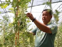 惠民县:电商拓宽西瓜销路 金融赋能绳网发展