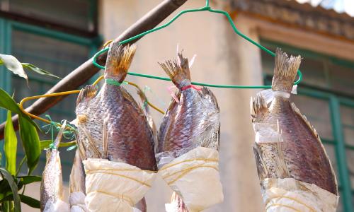 萬萬沒想到,這種常吃的魚竟是致癌物!趕緊告訴家里人…