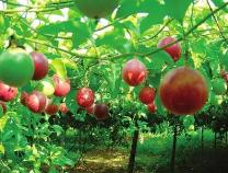 实现多样化 做活休闲农业