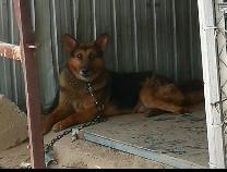 针对不文明养犬行为,滨城公安开出第一张罚单!