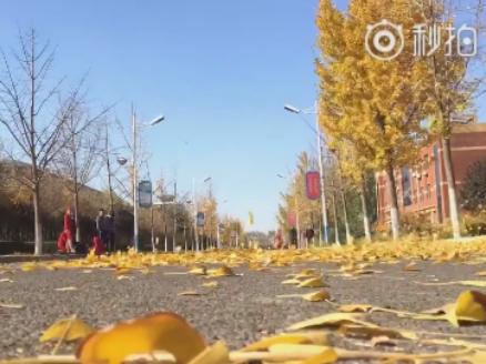 美如画!滨州学院校园内银杏落叶自成一景