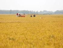 人民日报社论:让广大农民过上更加美好的生活