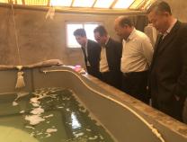 线纹海马向滨州人民报到!它是滨州水产养殖品种新成员