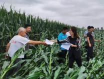 惠民县孙武街道农技人员到田间地头助农开展生产自救